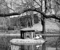 Lata 70-te XXw. Obecny park Fosa. Mur obronny, wówczas jak i obecnie jest w tym miejscu w katastrofalnym stanie, a szkoda mógłby to być element uatrakcyjniający ten zadbany odcinek fosy