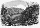1863 Wojna Waikato. Oddziały kolonialne maszerujące przez wyrąbaną w dżungli tzw. Great South Road